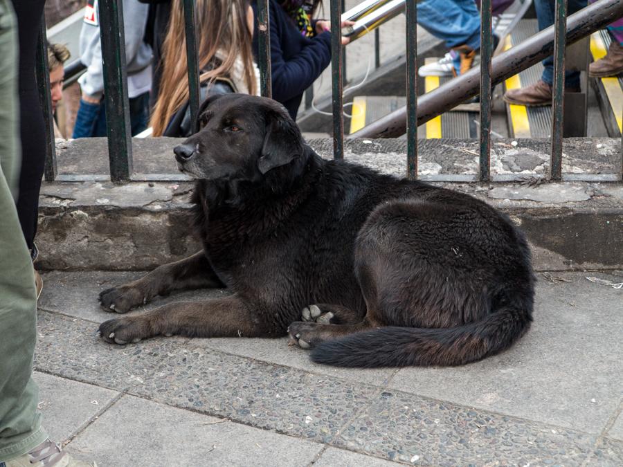 Black Subway Dog