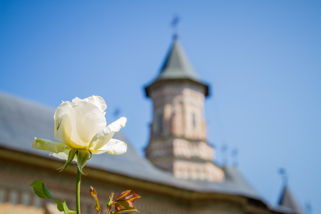 Rose at Neamt Monastery