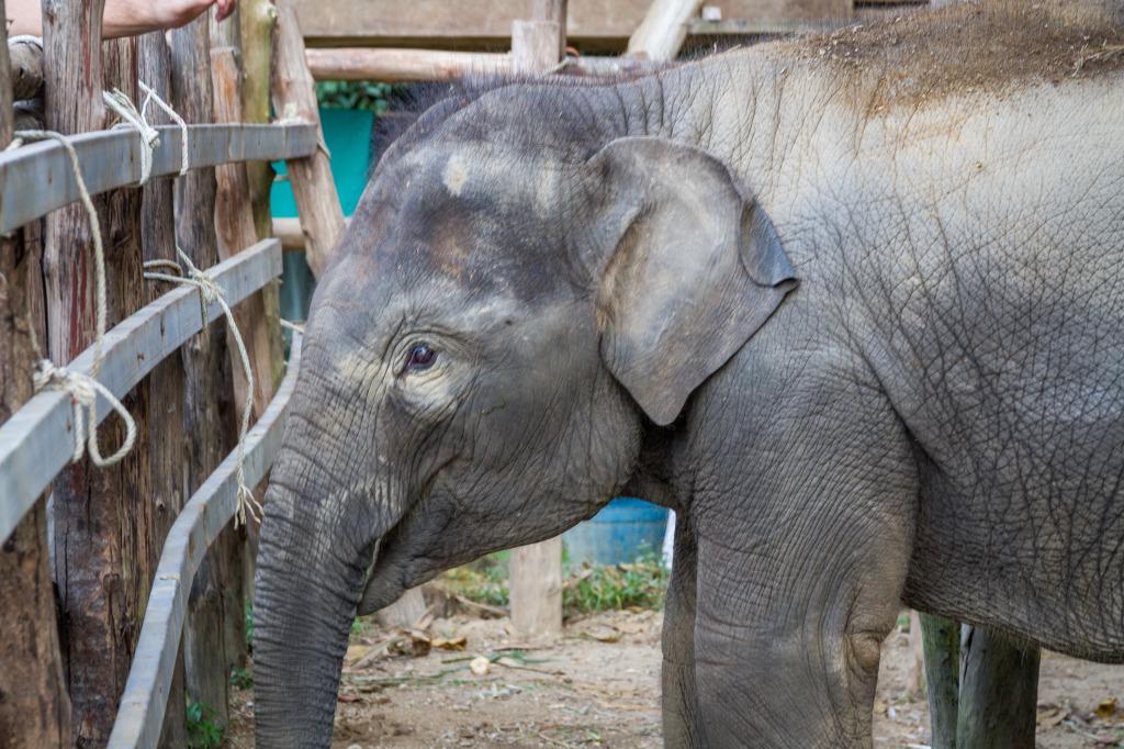 Elephant Experience wi...
