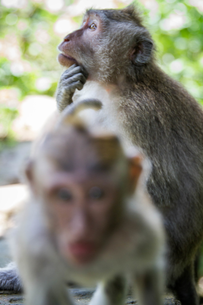 Baby Monkey attacks camera at Sacred Monkey Forest Ubud Indonesia