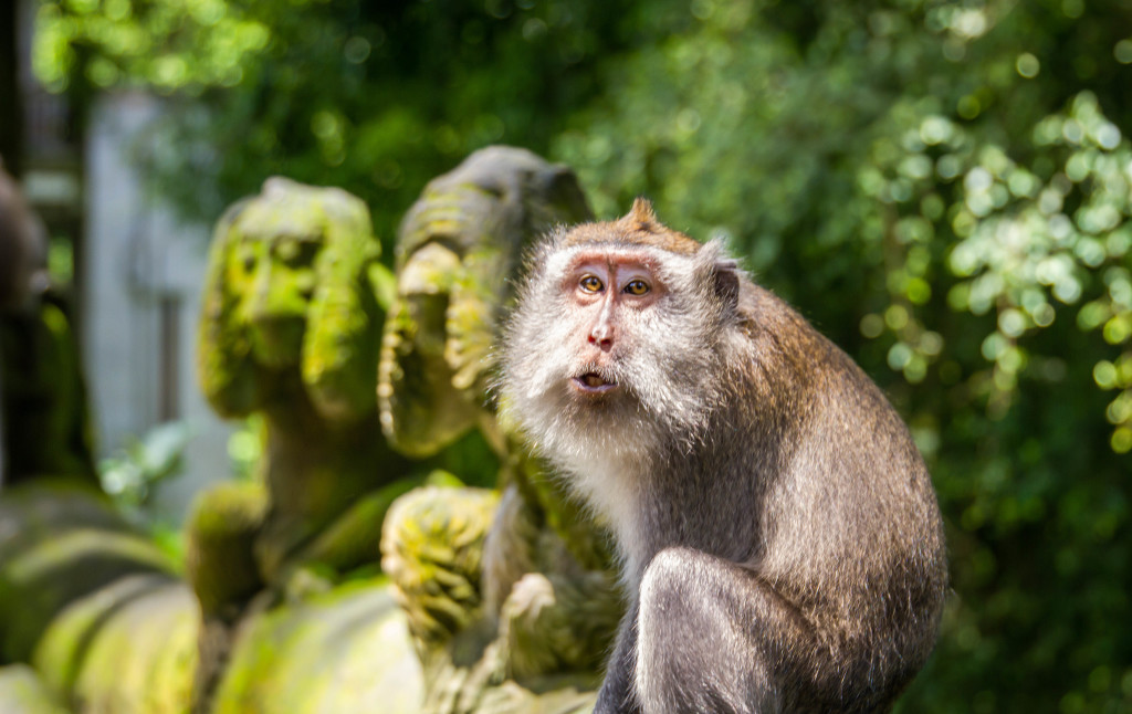 Hear See Speak no Evil Monkey at Sacred Monkey Forest Ubud Indonesia