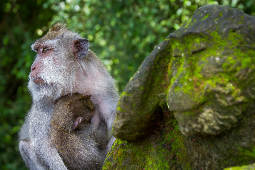 Monkey Statue and Mother at Sacred Monkey Forest Ubud Indonesia