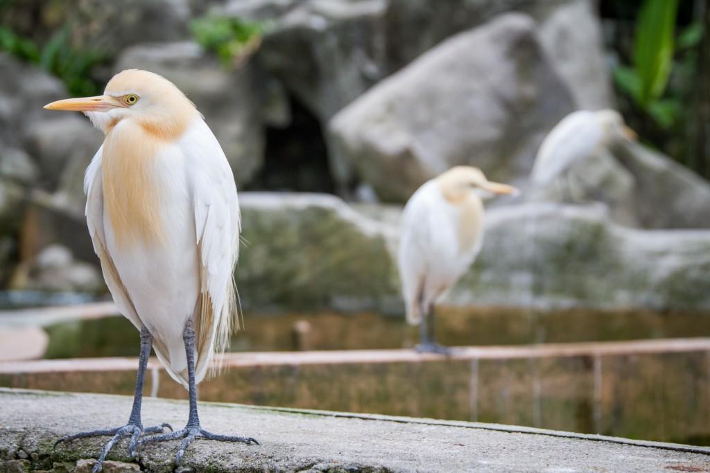 Birds at Kuala Lumpur Bird Park