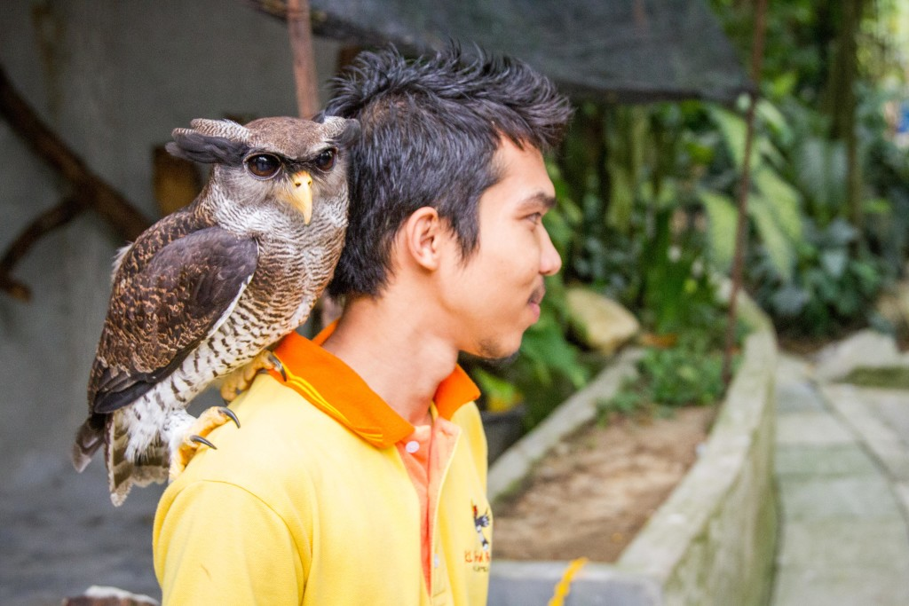 Kitty the Buffy Fish Owl and her caretaker
