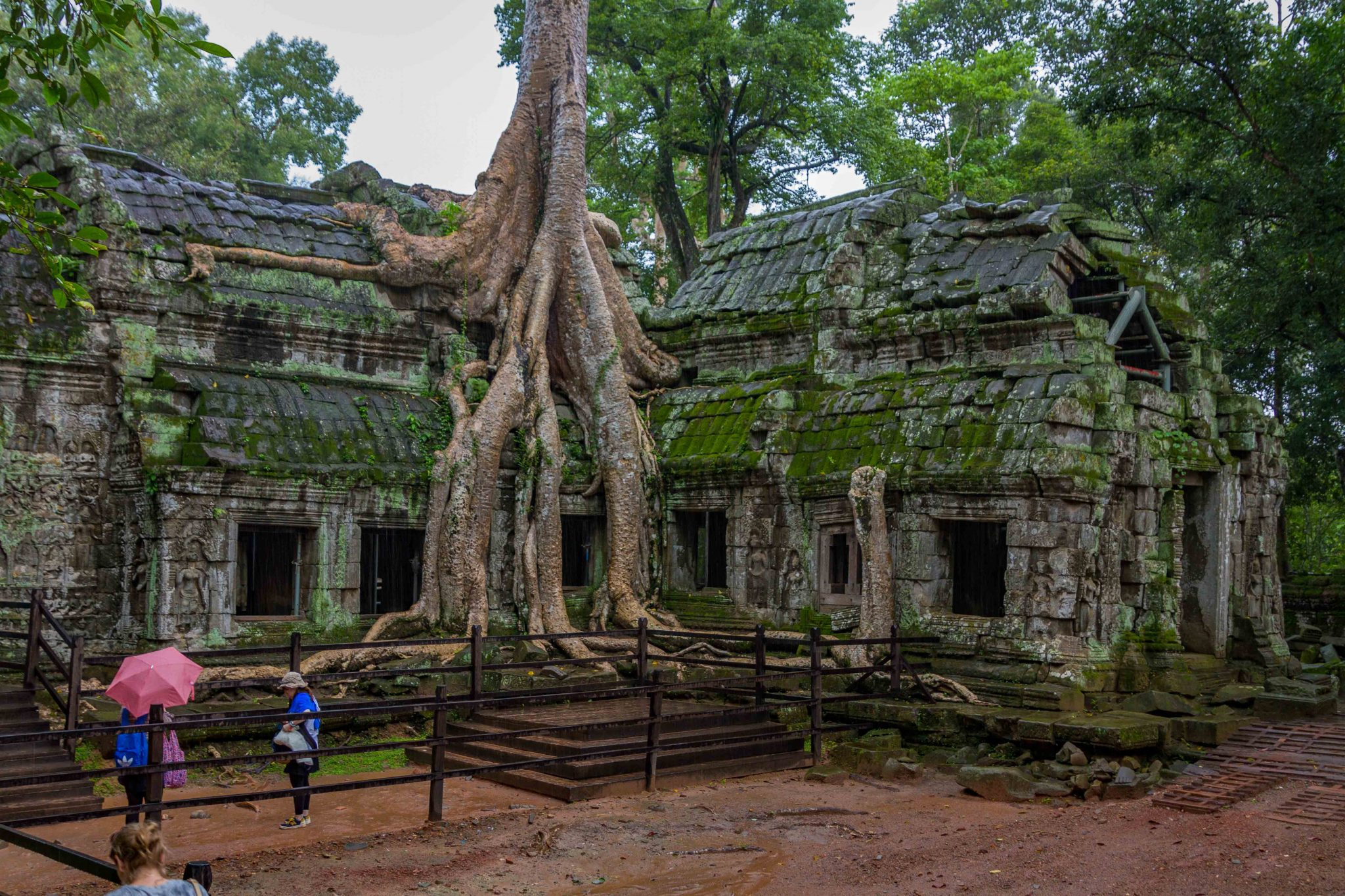 Spung Tree growing from Temple Ta Prohm Cambodia