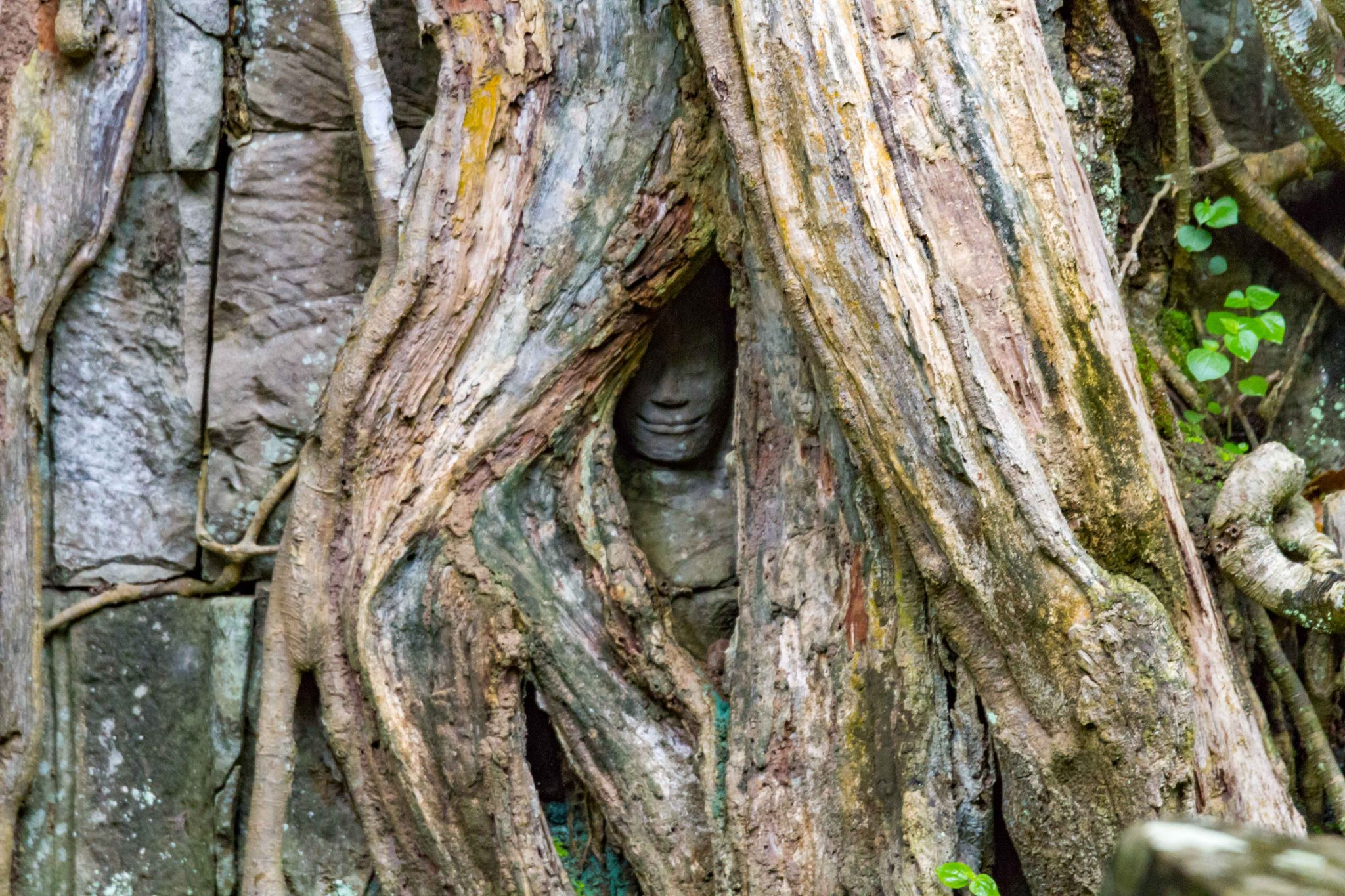 Ta Prohm Face in Tree Angkor Wat Cambodia